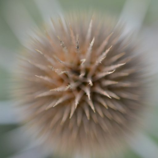cropped-thistle-crown1.jpg